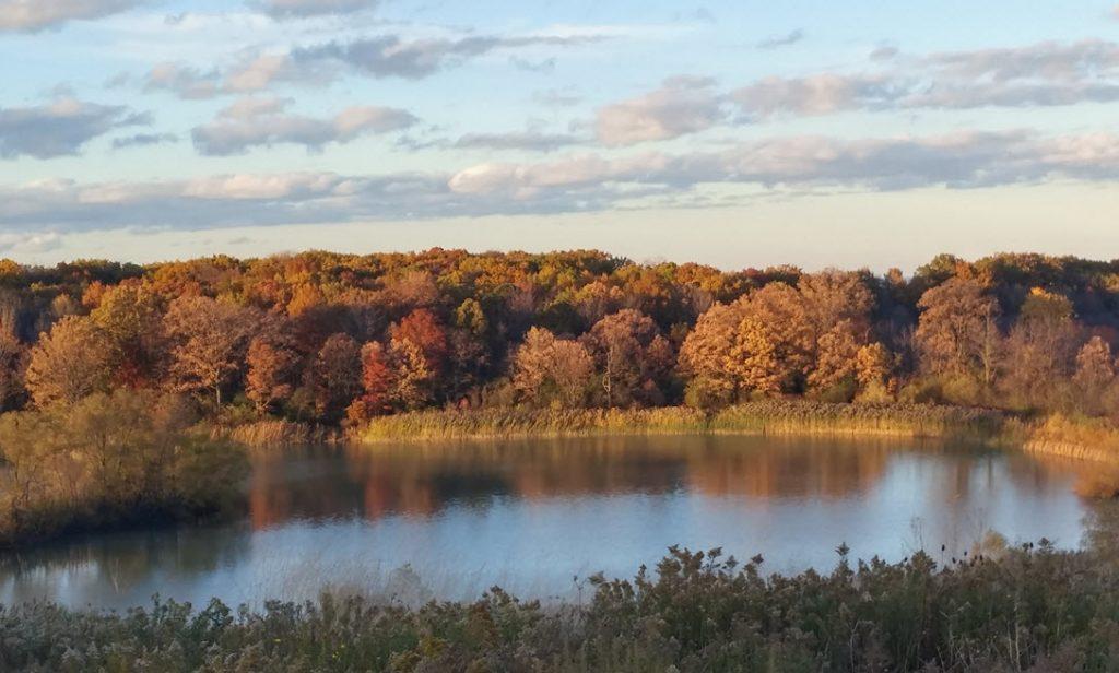 Autumn trees around pond